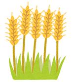 植物プラセンタ